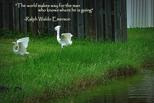 birds flying photography quote
