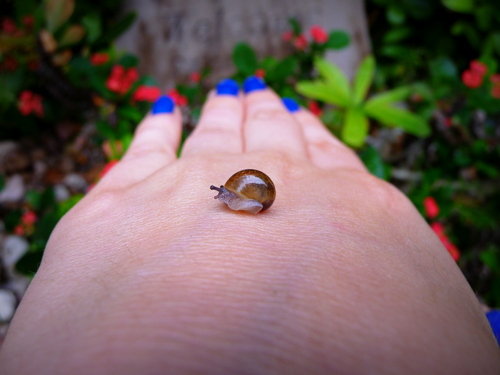 a little baby snail on my hand